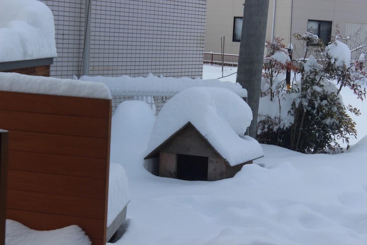 すごい大雪 2月15日