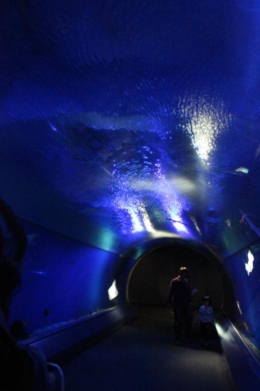大阪:世界最大級の水族館 海遊館