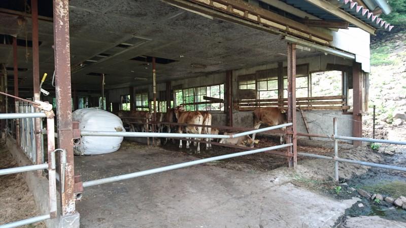 神津牧場 ジャージー牧場