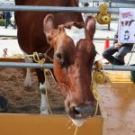 かながわ畜産フードコレクション開催 横浜赤レンガ