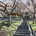 妙音寺  長野市倉科 桜