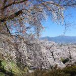 光林寺 桜とお寺と景色 すばらしかったー